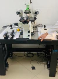 Bezymyannyj 2 199x270 - Модернизация эмбриологической лаборатории